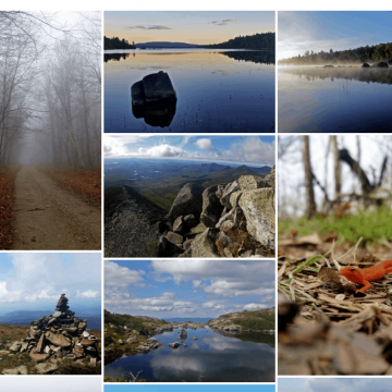 Nature Photography Postcards